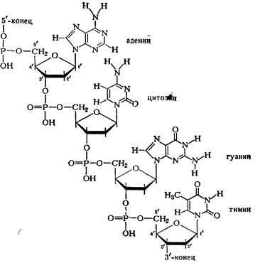 Химические свойства днк, физико химические свойства днк